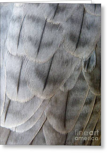 Barbary Falcon Feathers Greeting Card