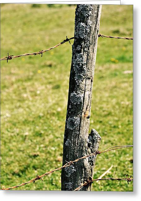 Barbed Fence Post Greeting Card by JAMART Photography