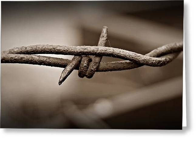 Barbed Wire 2 Sepia Greeting Card