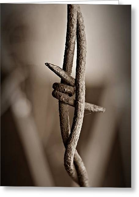 Barbed Wire 3 Sepia Greeting Card