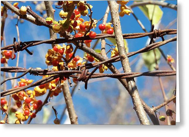Barbed Wire And Berries Greeting Card