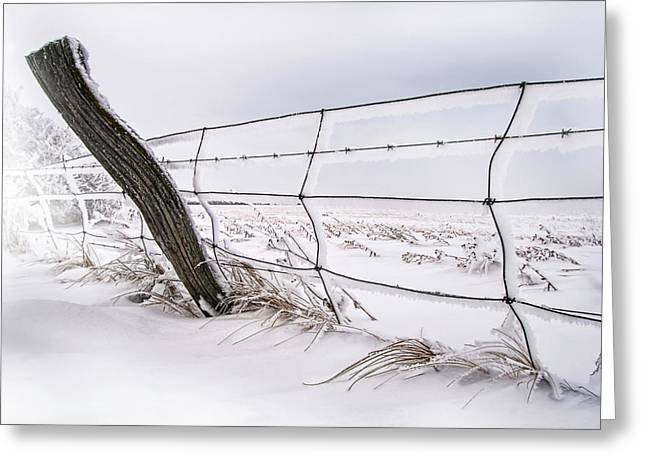 Barbed Wire And Hoar Frost Greeting Card by Dan Jurak