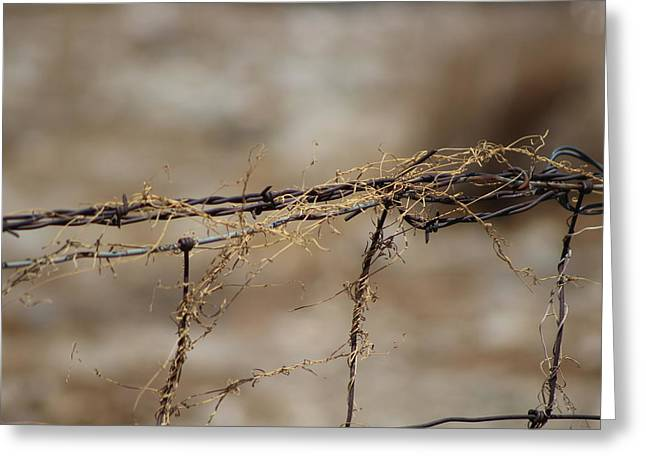 Barbed Wire Entwined With Dried Vine In Autumn Greeting Card