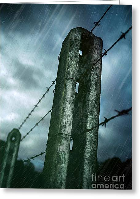 Barbed Wire Fence Greeting Card by Carlos Caetano