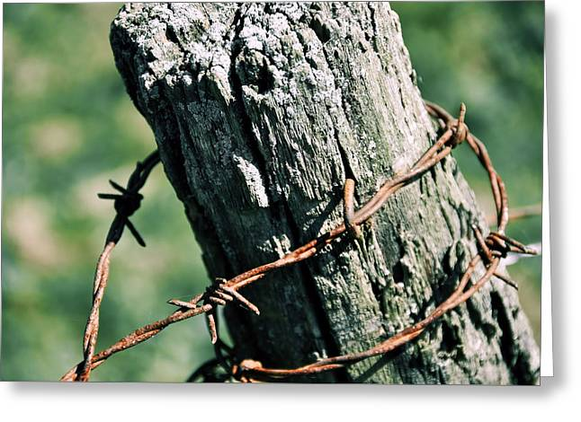 Barbed Wire Greeting Card by JAMART Photography