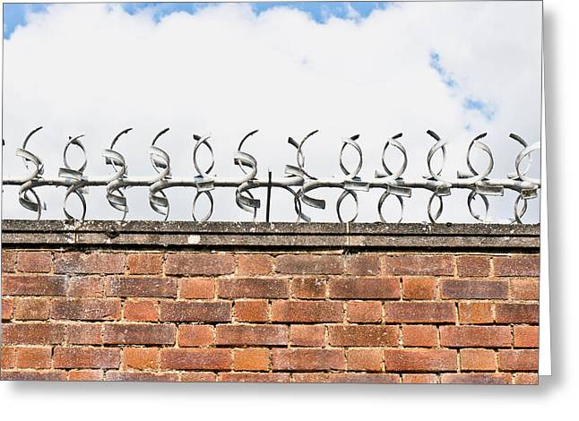 Barbed Wire Greeting Card by Tom Gowanlock