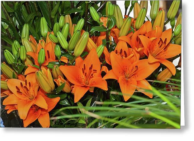 Barcelona Lillies Greeting Card by Michael Flood