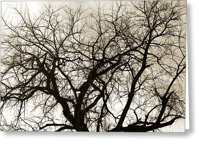Bare Branches Greeting Card by Marilyn Hunt