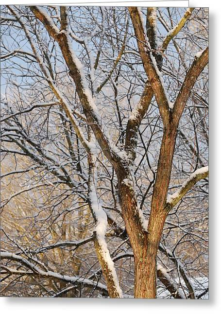 Bare Branches Greeting Card by Trudi Southerland