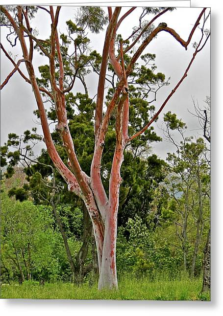 Bare Pink Tree Greeting Card by Liz Vernand
