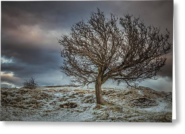 Bare Tree Against A Winter Sunset Greeting Card by Chris Fletcher