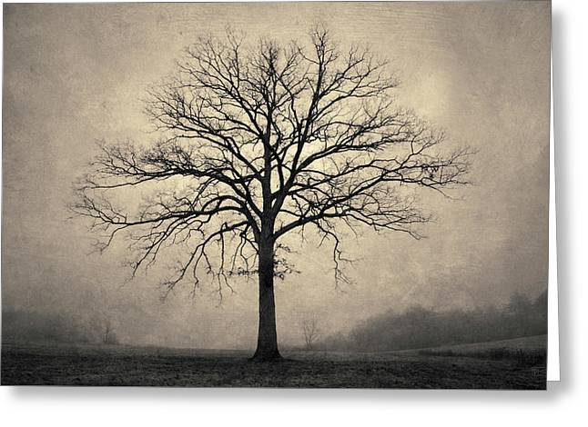 Bare Tree And Fog Toned Greeting Card