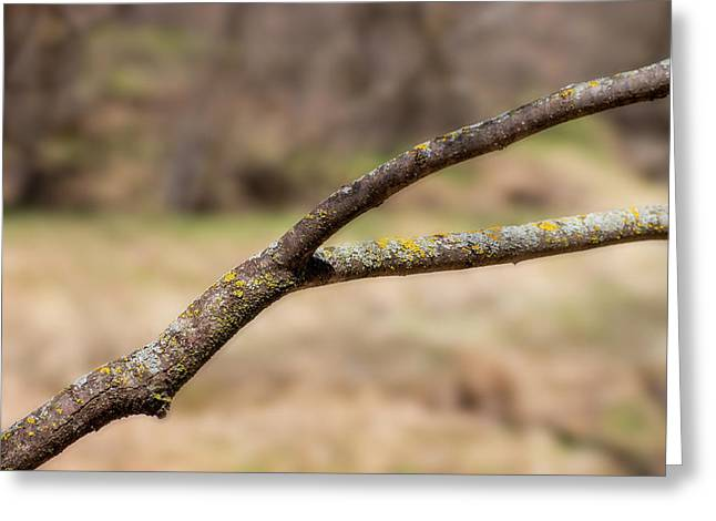 Bare Tree Branches In Early Spring Greeting Card by Donald Erickson