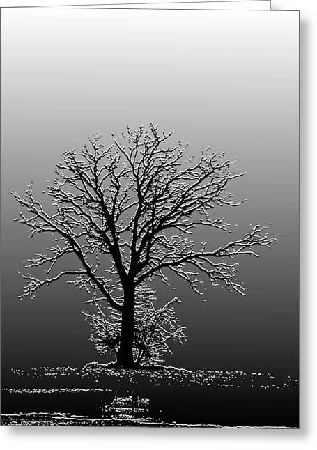 Bare Tree In Fog- Pe Filter Greeting Card by Nancy Landry