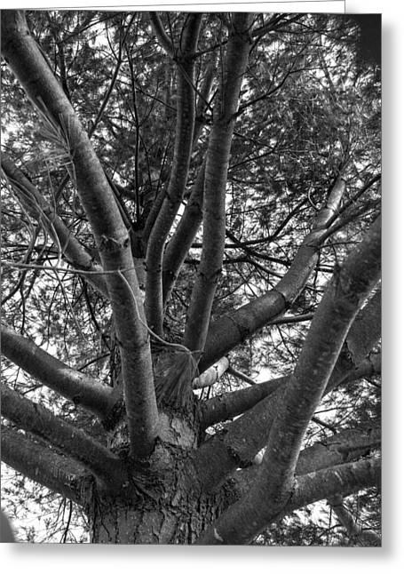Bare Tree Greeting Card