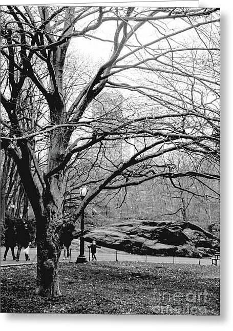 Greeting Card featuring the photograph Bare Tree On Walking Path Bw by Sandy Moulder