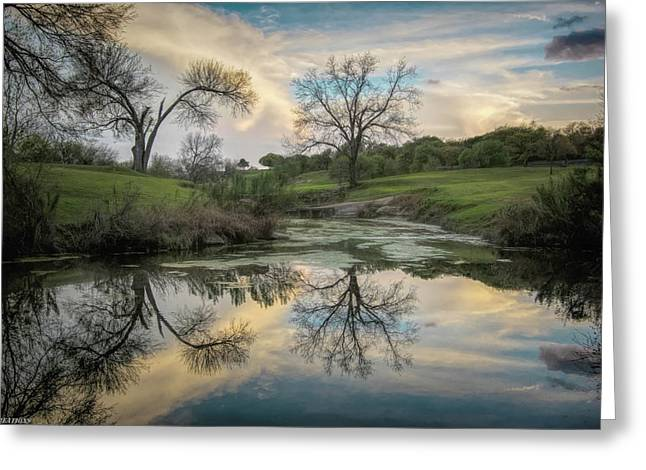 Bare Tree Reflections Greeting Card