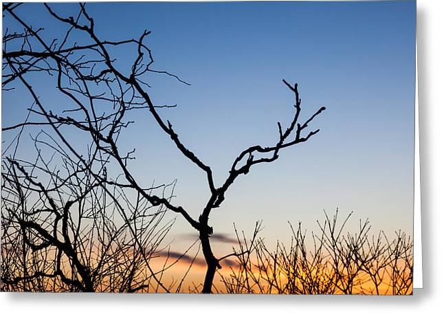 Bare Trees At Sunset Greeting Card