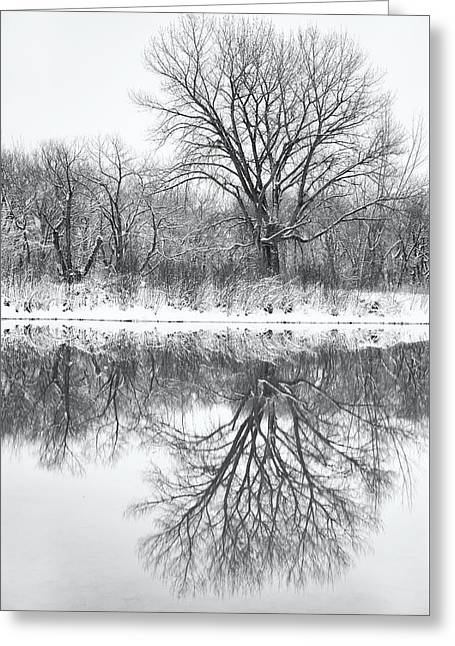 Bare Trees Greeting Card by Darren White