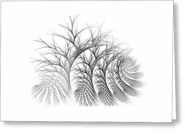 Bare Trees Daylight Greeting Card