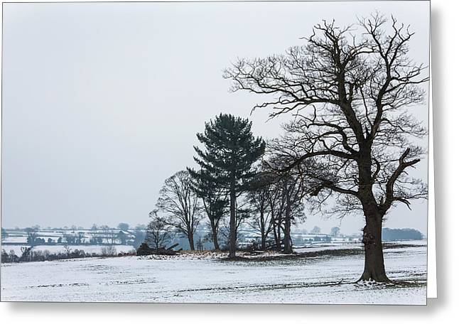 Bare Trees In The Snow Greeting Card