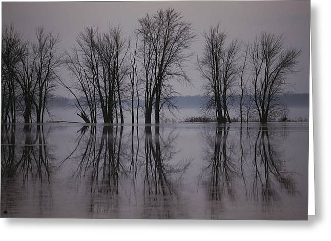 Bare Trees Reflected In The Water Greeting Card