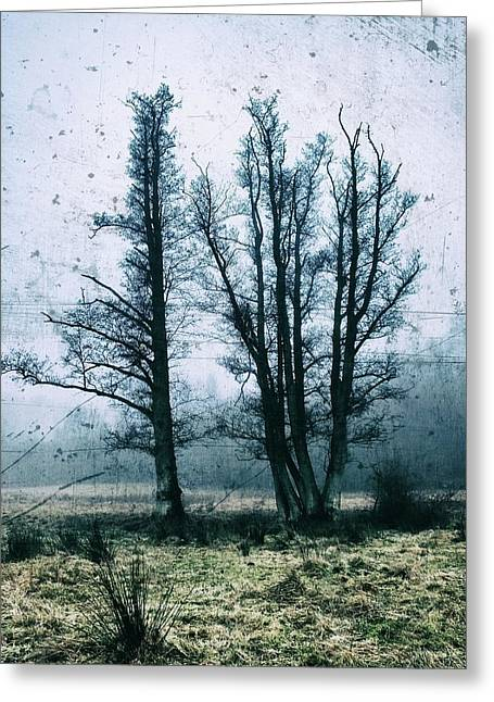 Bare Winter Trees Greeting Card