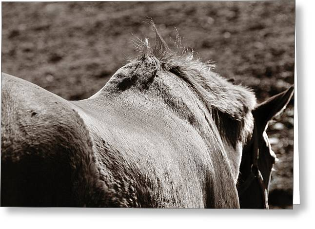 Greeting Card featuring the photograph Bareback by Angela Rath