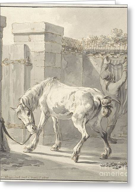 Bareback Horse By The Bridle Attached To A Pole Greeting Card