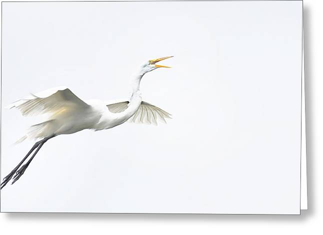 Barely There Greeting Card by Skip Willits
