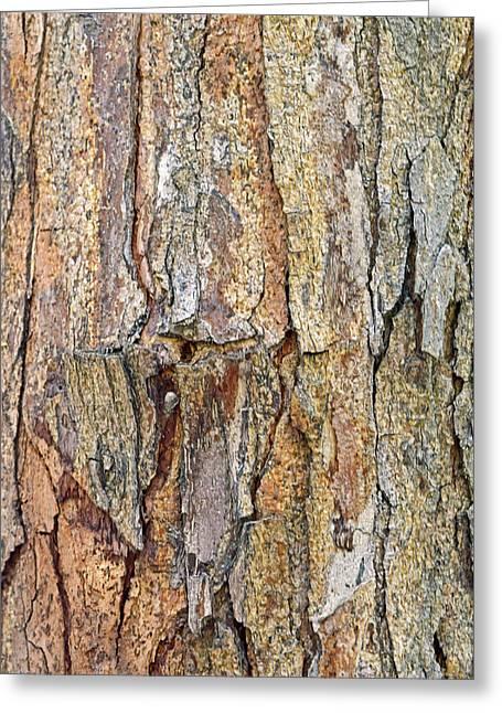 Bark No. 56-1 Greeting Card
