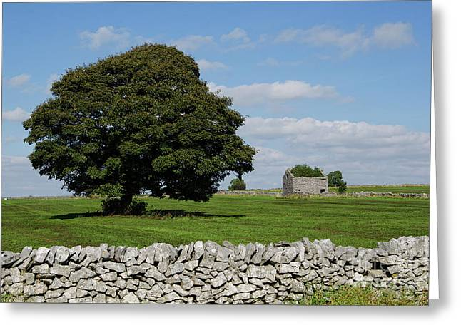 Barn And Tree Greeting Card by Steev Stamford