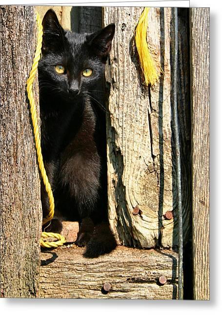 Barn Cat Greeting Card by Kristin Elmquist