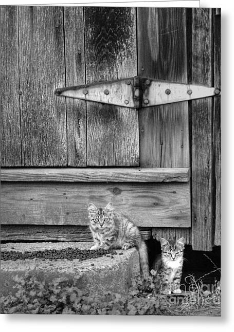 Greeting Card featuring the photograph Barn Cats by Pete Hellmann