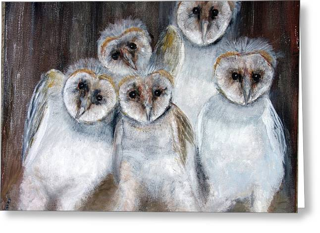 Barn Owl Chicks Greeting Card