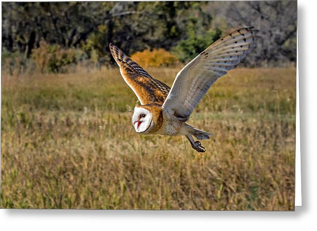 Barn Owl Flight 6 Greeting Card