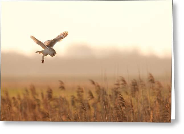 Barn Owl Hunting Greeting Card