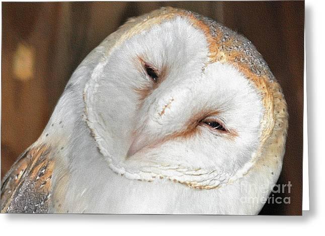 Barn Owl Greeting Card by Lydia Holly