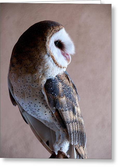 Greeting Card featuring the photograph Barn Owl by Monte Stevens