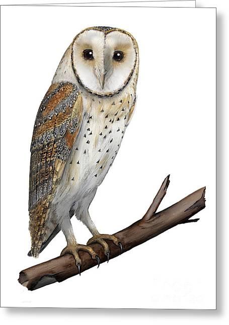 Barn Owl Screech Owl Tyto Alba - Effraie Des Clochers- Lechuza Comun- Tornuggla - Nationalpark Eifel Greeting Card by Urft Valley Art