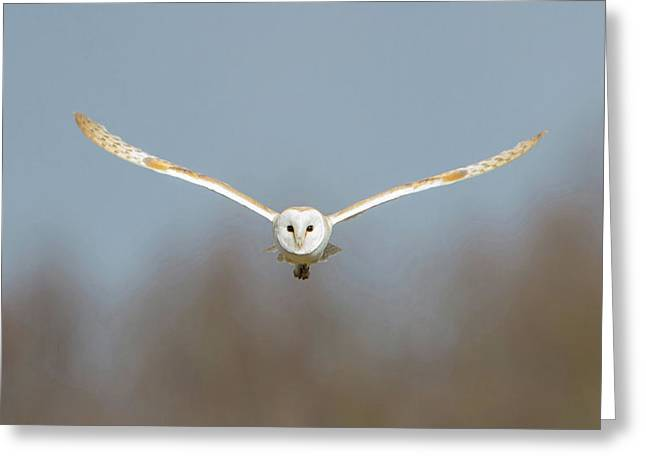 Barn Owl Sculthorpe Moor Greeting Card