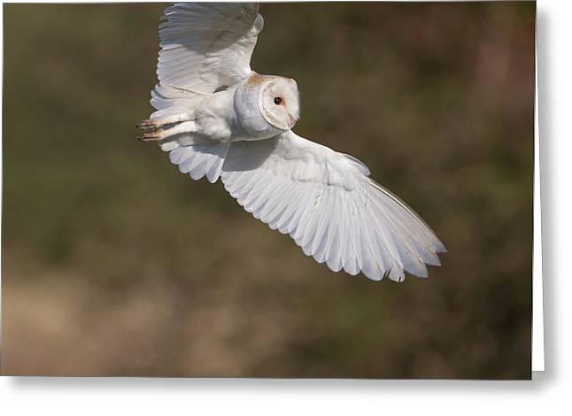 Barn Owl Wings Greeting Card