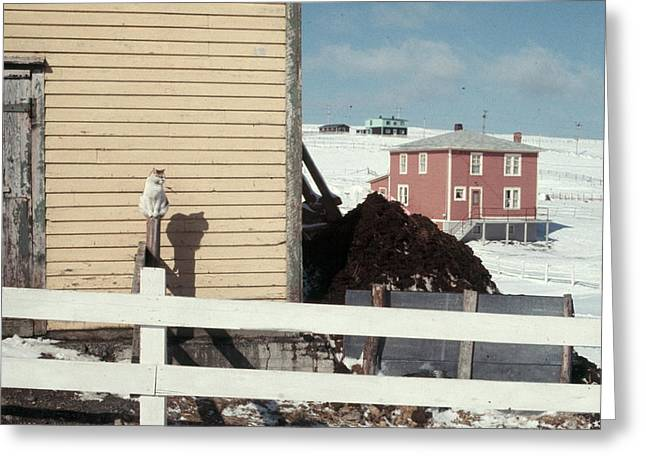 Greeting Card featuring the photograph Barn Yard Cat by Douglas Pike
