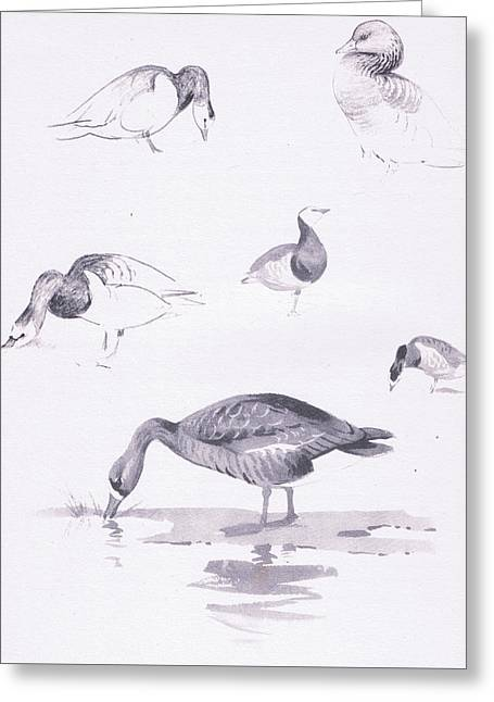 Barnacle And White Fronted Geese Greeting Card by Archibald Thorburn