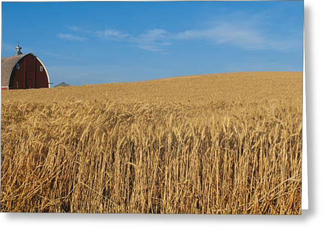 Barns And Wheat Fields, S.e. Washington Greeting Card by Panoramic Images