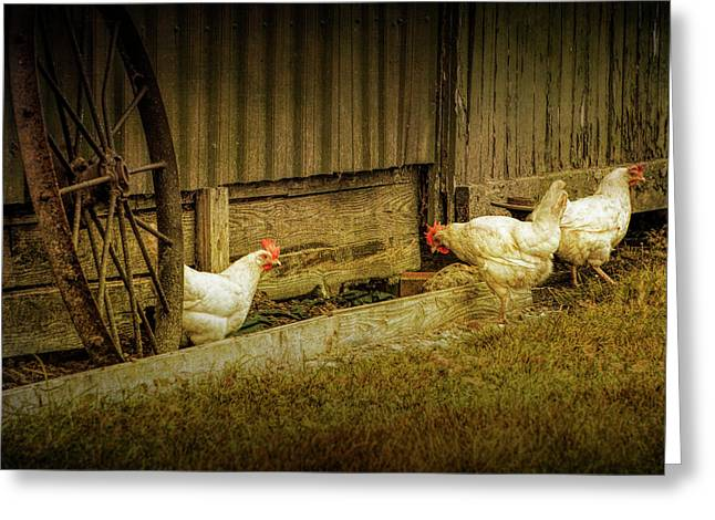 Barnyard Chickens Feeding Greeting Card