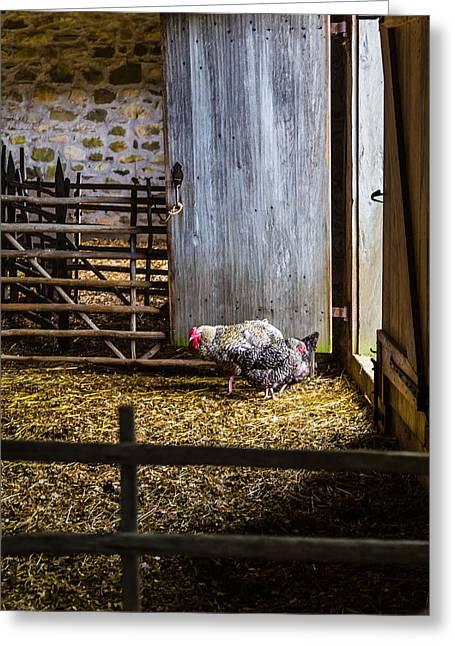 Barnyard Friends Greeting Card