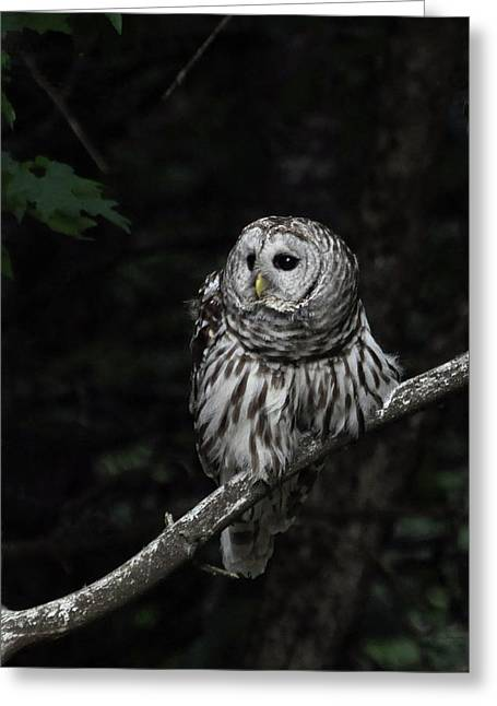 Greeting Card featuring the photograph Barred Owl 2 by Glenn Gordon