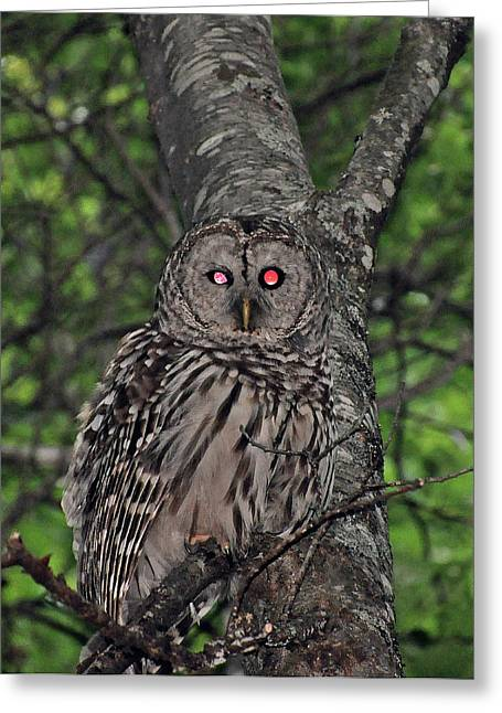 Greeting Card featuring the photograph Barred Owl 3 by Glenn Gordon