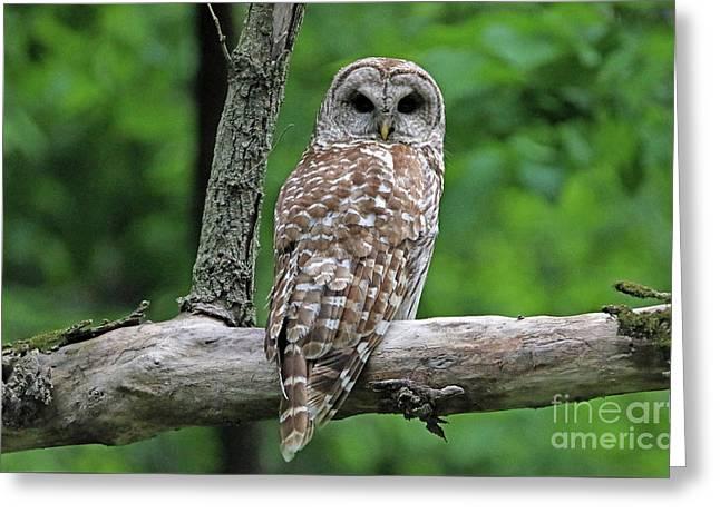Barred Owl Greeting Card by Elizabeth Winter